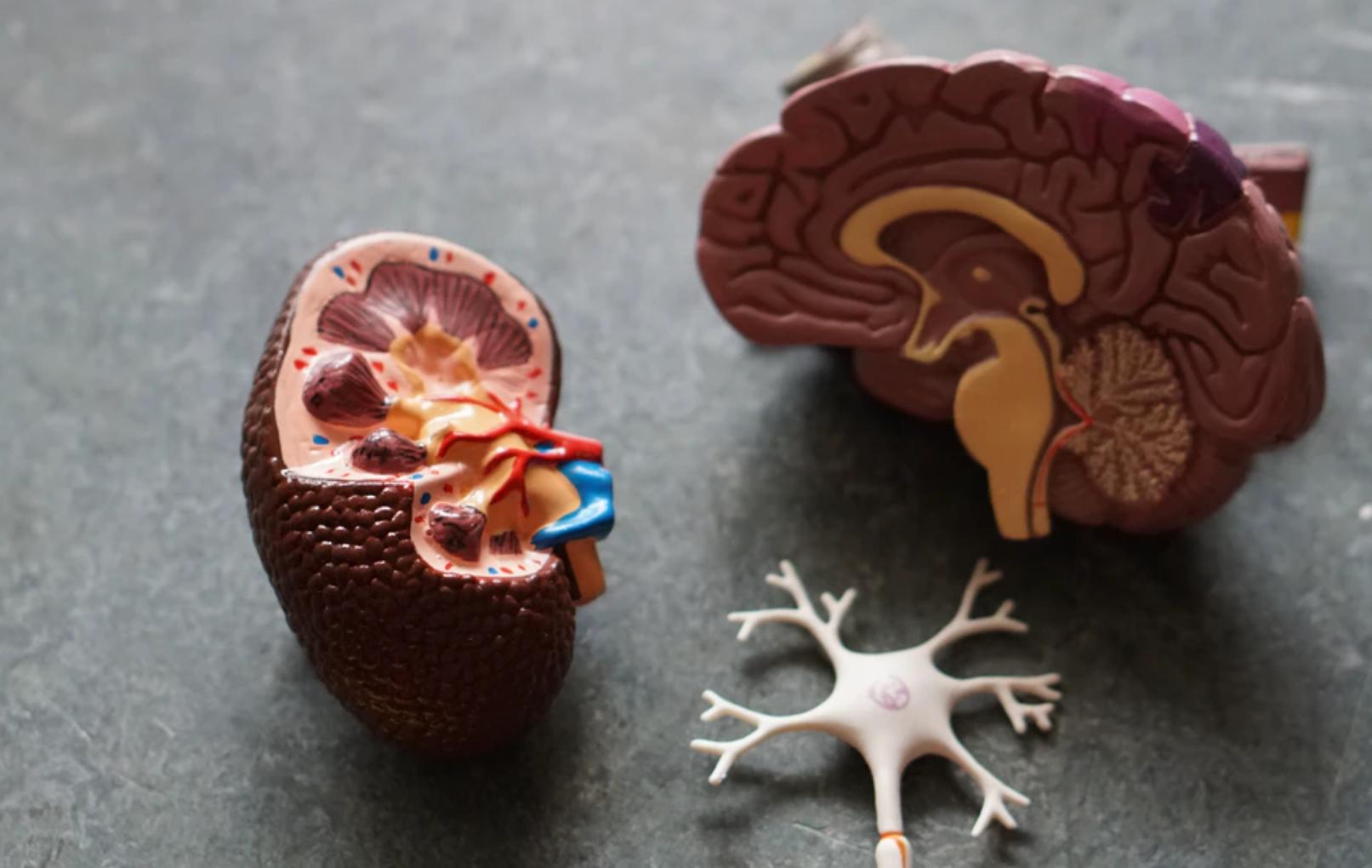Chronic Kidney Disease and Mental Health